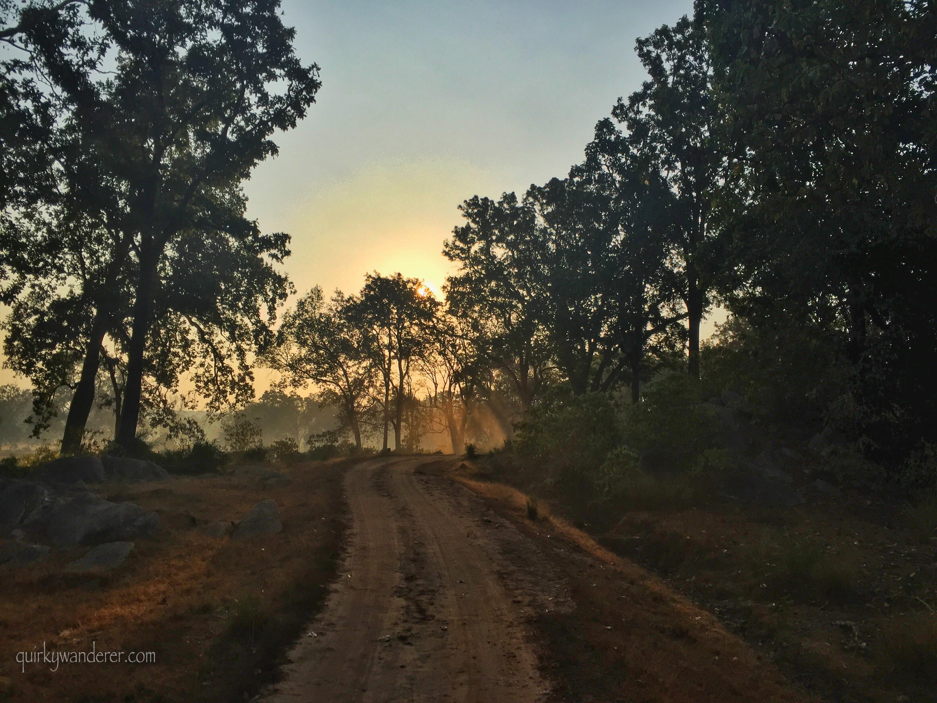Kanha National park sunrise 4
