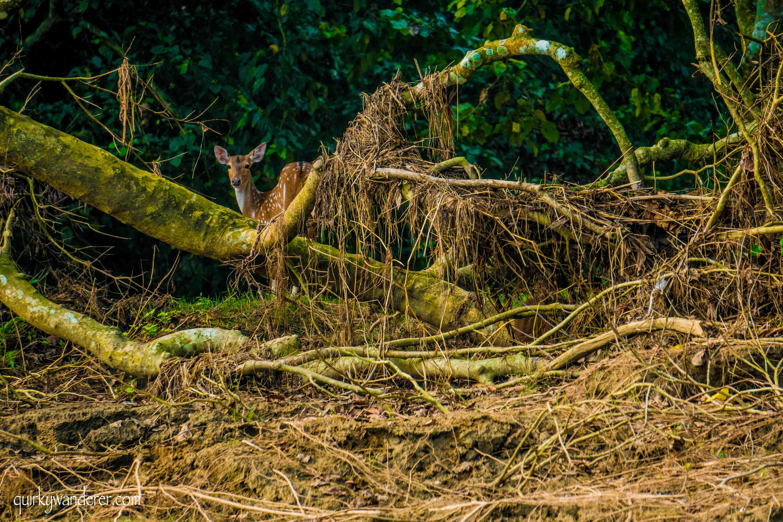 Chitwan national park mammals
