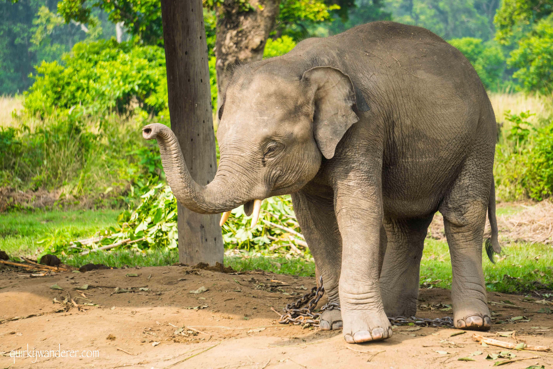 elephants in Nepal