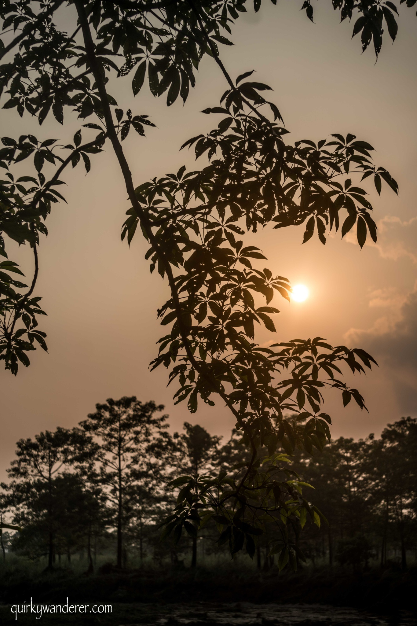 chitwan sunsets