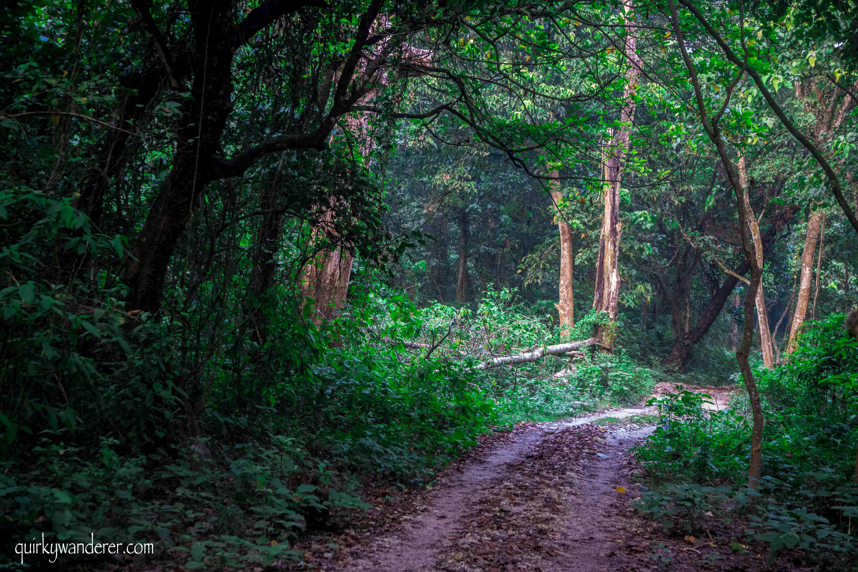 forest-chitwan
